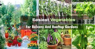 rooftop vegetable garden planters container garden on balcony