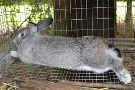 Air Conditioned Rabbit Hutch Rabbits Cool In A Climate Shallow Pond Farm