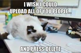 Angry Cat Memes - 20 laughable angry cat meme sayingimages com