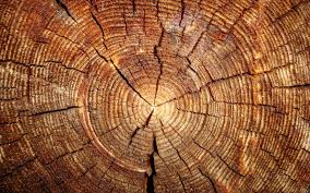 wood tree rings images Tree rings android wallpapers for free jpg