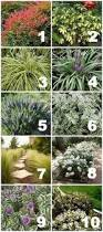Landscaping Ideas For Front Yards Native Drought Tolerant Plants For Your Yard Drought Tolerant