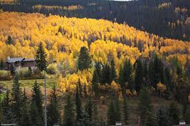vail thanksgiving vail colorado vail colorado fall colors aspen trees