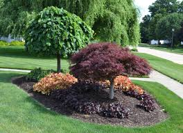 simple front yard landscaping ideas with trees on a budget amys
