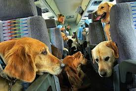 traveling with pets images Important things to know before traveling with pets in mexico jpg