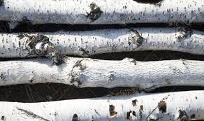 inspirations fireplace logs decorative decorative white birch
