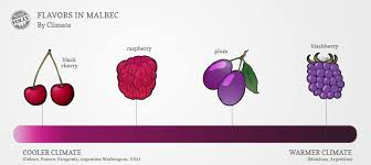 wine facts kinds of wine what is malbec wine 4 amazing facts about malbec wine folly