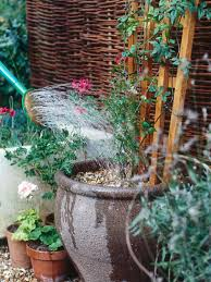 Small Water Gardens In Containers How To Grow Flowering Vines In Containers Hgtv