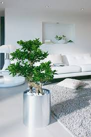 low light houseplants plants that don t require much light 99 great ideas to display houseplants indoor plants decoration