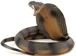 13 manfaat darah ular kobra dan dagingnya bagi kesehatan manfaat