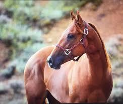 l tat de si e camus r um crossbell performance horses home