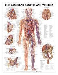 university of utah anatomy image collections learn human anatomy