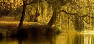 willow tree a guided meditation for grounding and balance