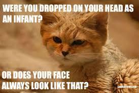Sand Meme - judgmental sand cat is judging you la rosa knows