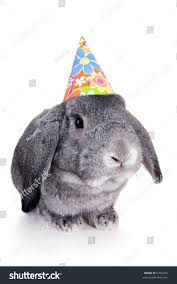 rabbit birthday gray mini lop ear rabbit birthday stock photo 5766220