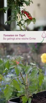 gem se pflanzen balkon tomaten im topf halten so gelingt es kübel der balkon und
