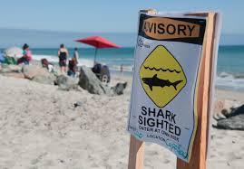 California Beaches images Southern california beaches closed after sighting of more than two jpg