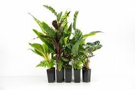 Easy Care Indoor Plants How To Keep Your Indoor Plants Alive Go Easy On The Water The