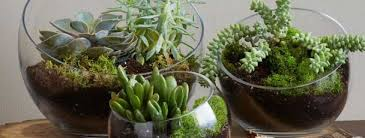 how to make a terrarium palmers garden centre