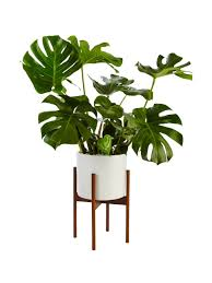 Modern Houseplants by 9 Ways To Pot Your Houseplants Hgtv