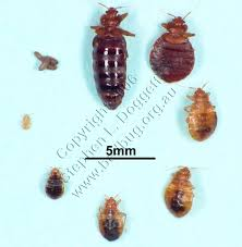 Bed Bug Exterminator Detroit Dayton Pest Control 17 Photos Pest Control 8235 Old Troy