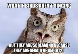 Funny Owl Meme - lawlz 盪 laugh out loud on this humor site with funny pictures and