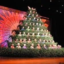 singing christmas tree christmas trees 1900 queens rd w