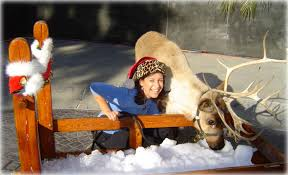 things to do in san diego in winter 2017 january events u0026 more