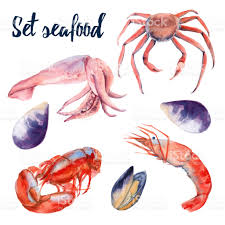 set of seafood crab shrimp lobster mussels and squid isolated on
