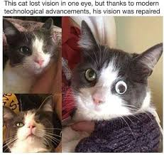 Lost Cat Meme - dopl3r com memes this cat lost vision in one eye but thanks to