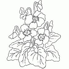 printable lily flower coloring pages free and high resolution free