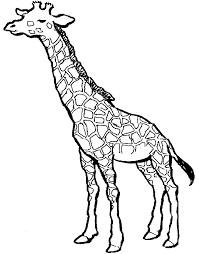 simple giraffe outline paint picture giraffe