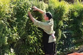 Vertical Wall Garden Plants by Wall Garden Livewall