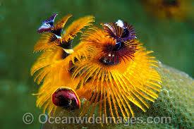 marine worm photos images u0026 pictures