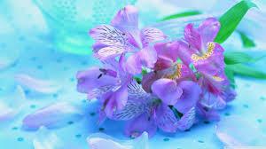 hd images of flowers light purple flowers 4k hd desktop wallpaper for 4k ultra hd tv