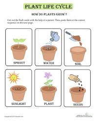 2524 best plants images on pinterest plants spring and gardening