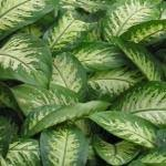 indiaplants info plants garden accessories and more