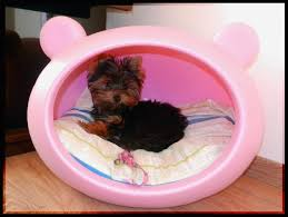 cute dog beds best images collections hd for gadget windows mac