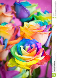 Multicolor Roses Multi Colored Roses Royalty Free Stock Image Image 26269936