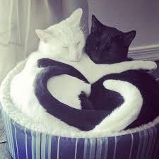 Cat Hug Meme - cats having a lovely hug
