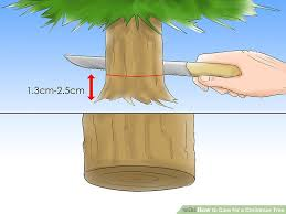 how to care for a tree 12 steps with pictures