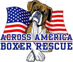 rescue a boxer dog information across america boxer rescue