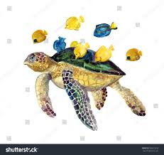 watercolor illustration turtle color fish stock illustration