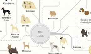 the family tree of dogs infographic reveals how every breed is