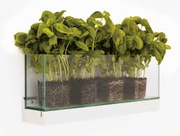 wall mounted herb garden glass garden pot wall mounted rectangular front by l