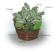 Okra Container Gardening Herbs Color U0026 Collards Container Garden Bonnie Plants