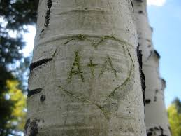 initials carved in tree carve my initials into a tree the other a list