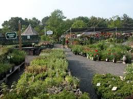 native plant centre winterberry gardens ct garden center landscape u0026 lawn service