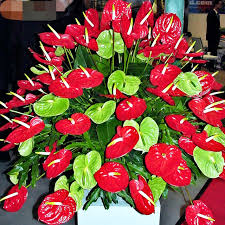 Flowers For Sale Online Shop On Sale 50pcs Red Anthurium Seeds Home Garden Plants