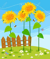 wooden fence and sunflowers royalty free cliparts vectors and