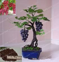 Indoor Vine Plant Indoor Vine Plants Promotion Shop For Promotional Indoor Vine